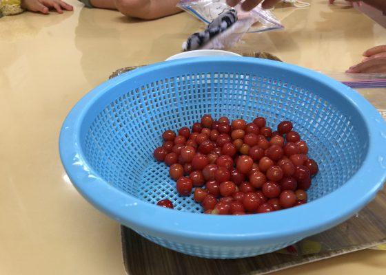 さくらんぼ収穫:小規模保育事業所ひだまり