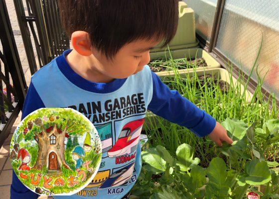 野菜を収穫しました!:こびとのおうち
