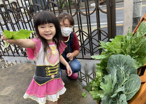 収穫した野菜で焼きそば作り✨