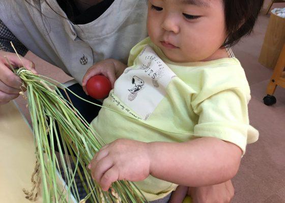 「お米の赤ちゃんだね!」